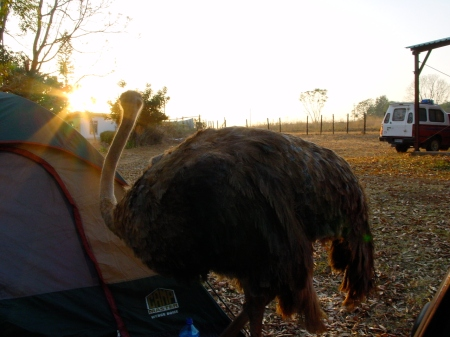 And waking up (as always sunrise), to a curious ostrich right outside my tent, somewhere in Namibia!