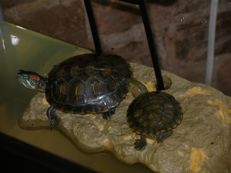 The monster turtle Coki is on the left, and Mottsy is on the right. I do love them both equally though!