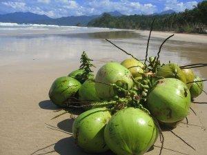 1815229-Lazy-Coconuts-on-Sabang-Beach-0