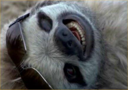 3-Toed Sloth!